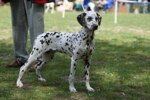 lissy_20110529_puppy_f