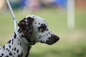 lissy_20110529_puppy_h
