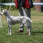 lissy_20110529_puppy_i