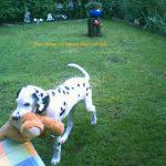 b_20080628_neron_c