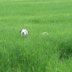 b_20100615_neron_grass