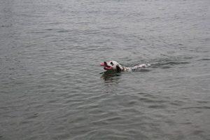 b_20100906_luna_schwimmen