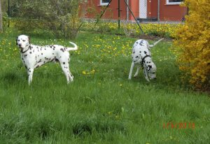 b_20130501_charly_august